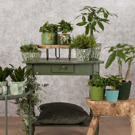 Bunnik Plants Trends 71200